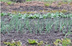 Umjetna i organska gnojiva