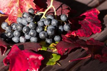 Zdrava prehrana: Eko vino i maslinovo ulje iz biodinamičkog uzgoja