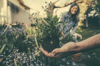 Uređenje vrta i okućnice: Koje biljke odabrati za vaš zeleni kutak?