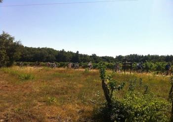 San Rocco Bike: Rekreirajte se u prijestolnici vina i istarske gastronomije