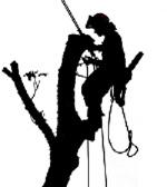 drveća, orezivanje, košnja trave, Pula