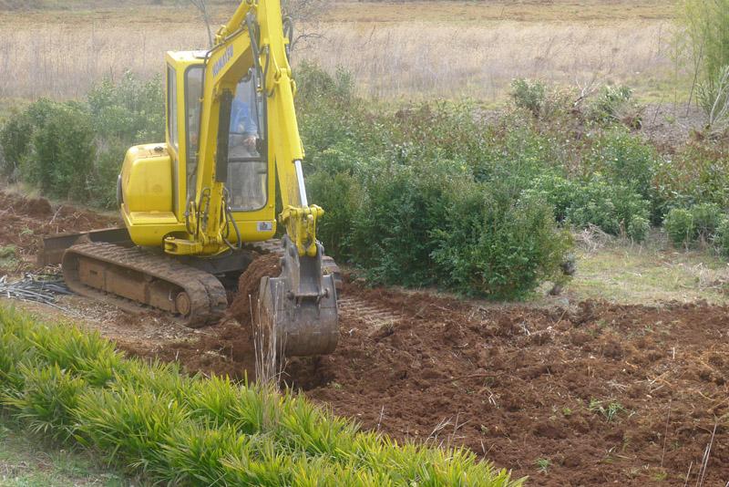 priprema terena za sadnju maslina