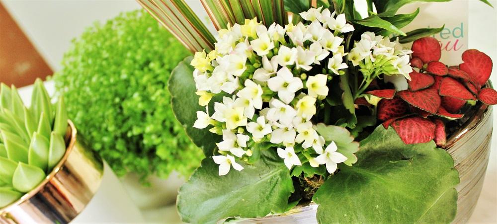 Cvjećarna Silvia Rovinj