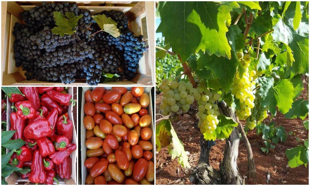 Domaće voće i povrće Istra