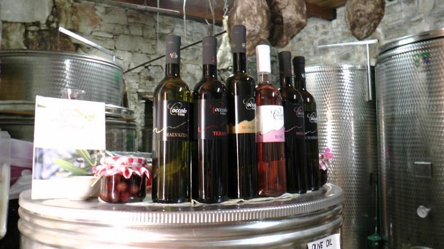Coccolo vina, Tar, istarska vina, degustacije