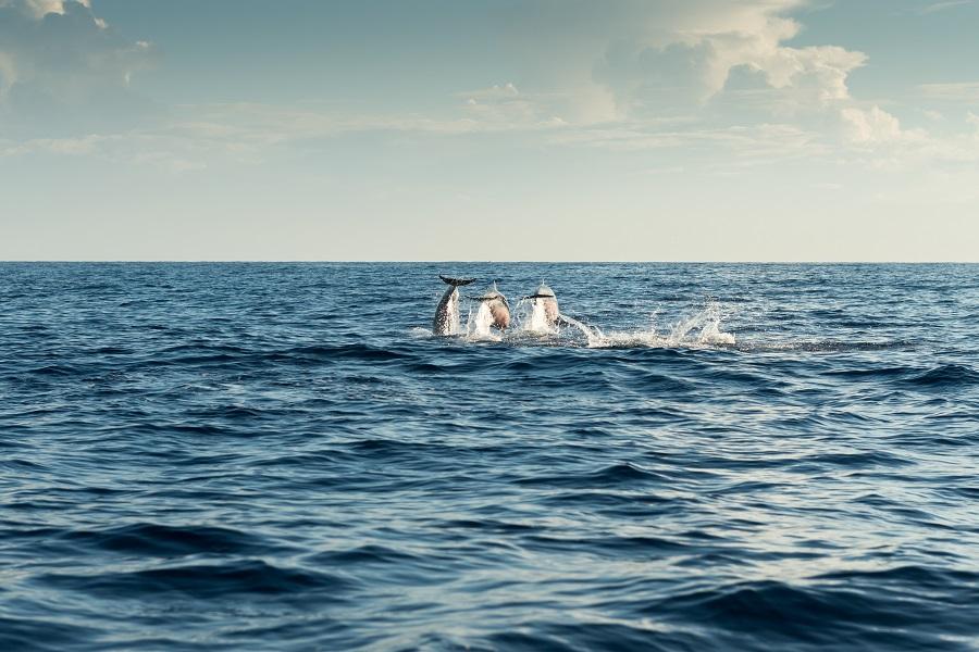 Sport&Fun, Vrsar, Istra, delfin safari