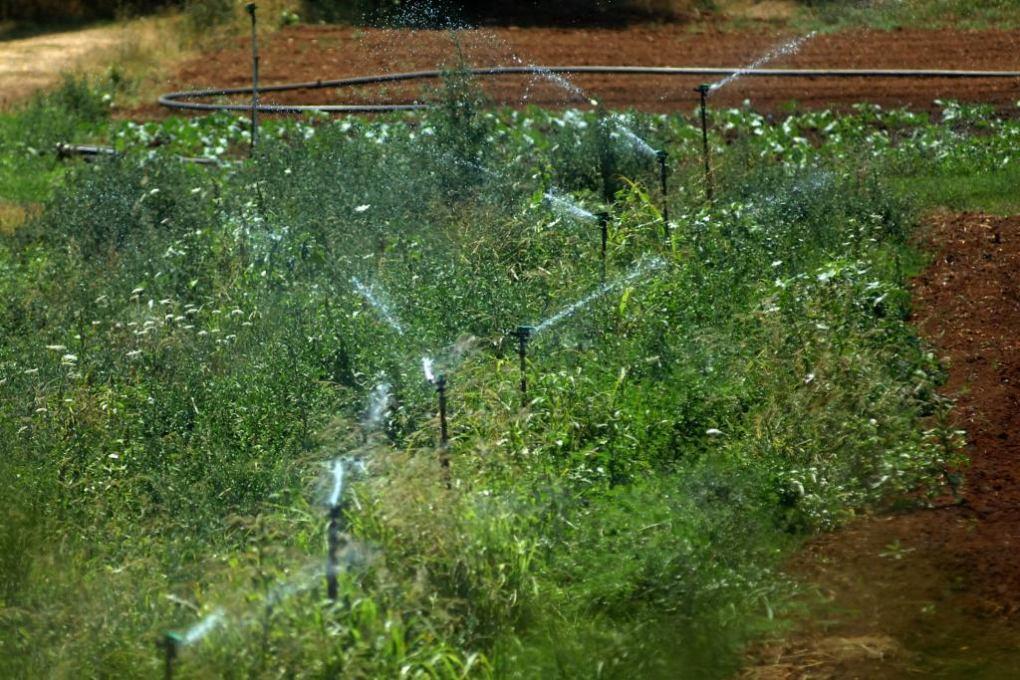 Grad Pula dao 20 tisuća kuna za razvoj poljoprivrede