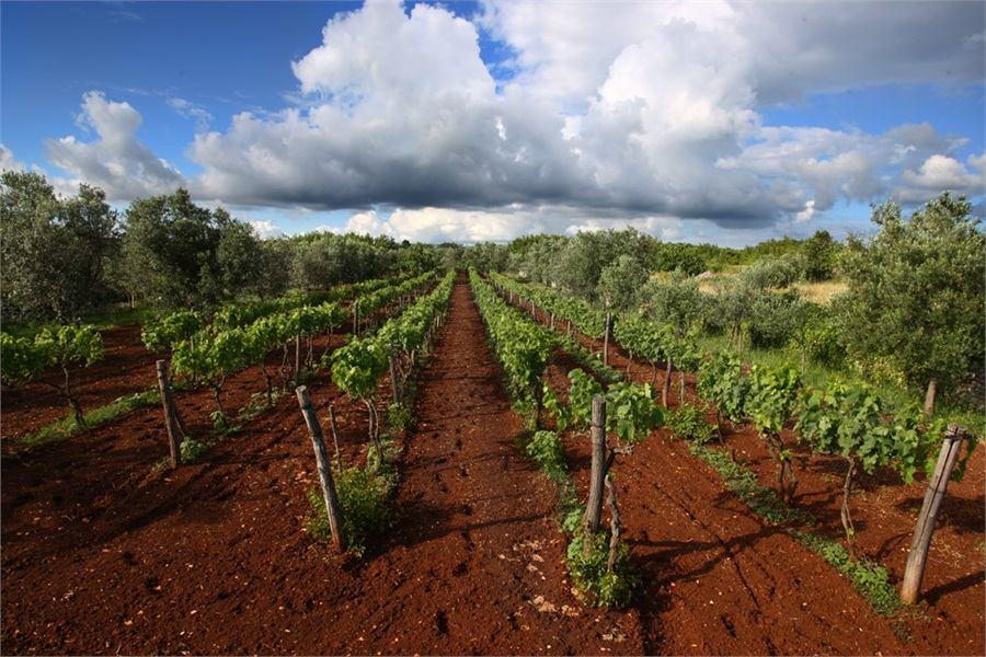 Dan otvorenih vinskih podruma u Istri 2014.