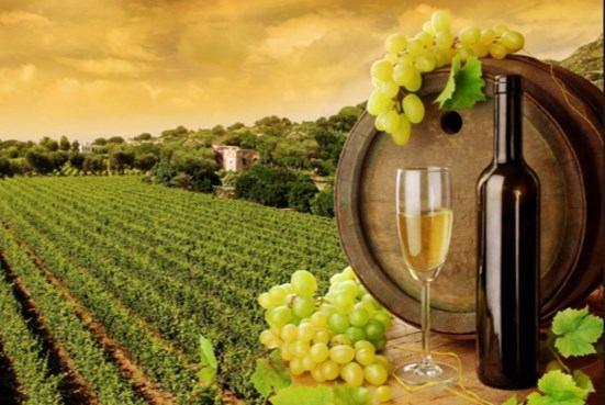 Izmjene Pravilnika o investicijama u vinarije i marketingu vina