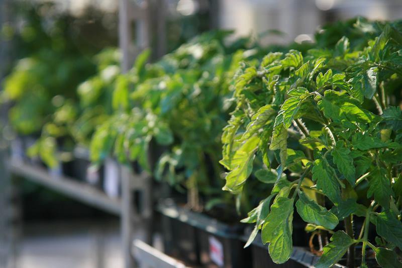 Sve za berbu grožda pronađite u agrariji u Bujama (video)