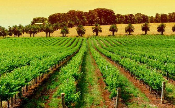 Natječaj za dodjelu potpora za pokretanje poslovanja mladim poljoprivrednicima