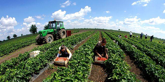 Poljoprivredni radnik (m/ž)