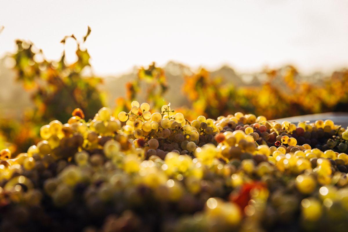 Poziv na terenske radionice za vinare i vinogradare