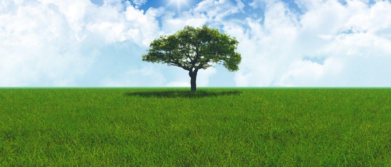 Donosimo vam savjete za zelen i lijep travnjak