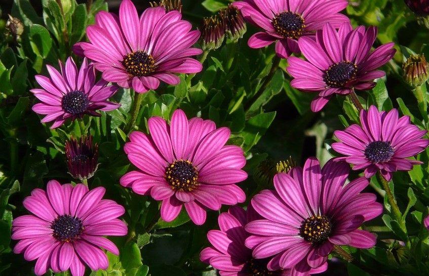 Ne prepustite 20. sajam cvijeća Umag Floria