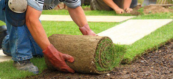 Trebam ponudu za postavljanje travnjaka u rolama