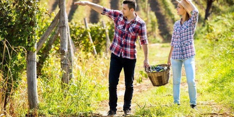 Natječaj: Potpore za ulaganja u preradu, marketing i/ili razvoj poljoprivrednih proizvoda