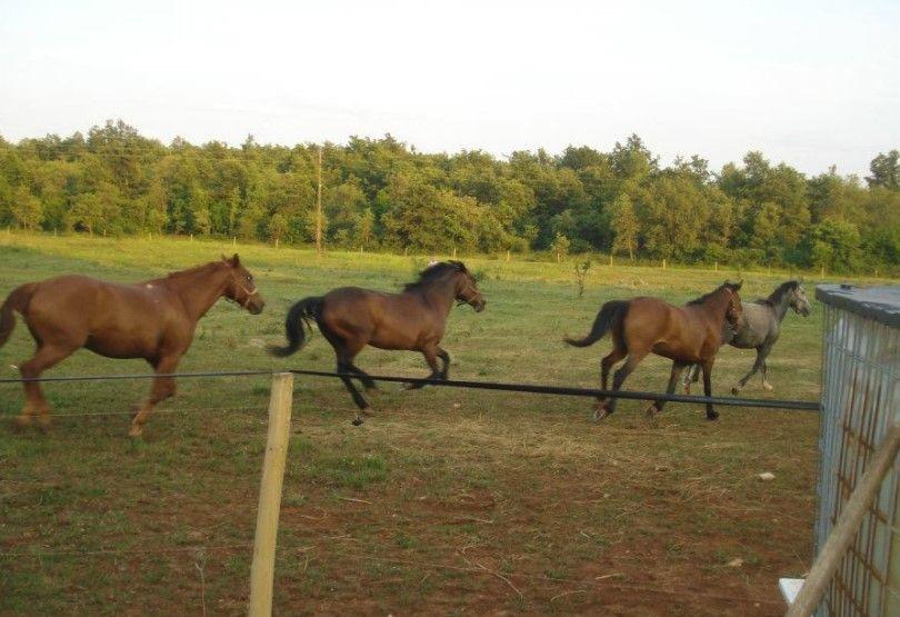 Juhači i nejahači konja (m/ž)