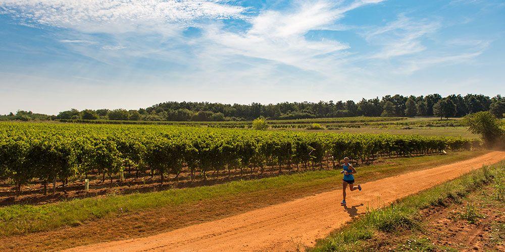 Uskoro utrka Istrian Wine Run