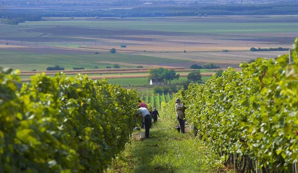Vinari, prijavite se na natječaj za promidžbu na tržištima trećih zemalja