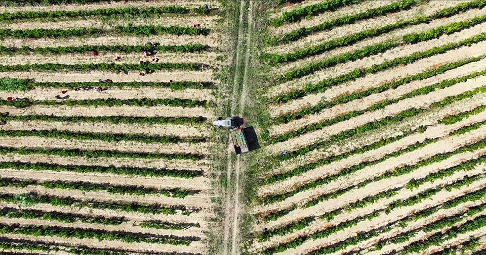Četiri malvazije na četiri istarske zemlje: Priča o vinima Cattunar