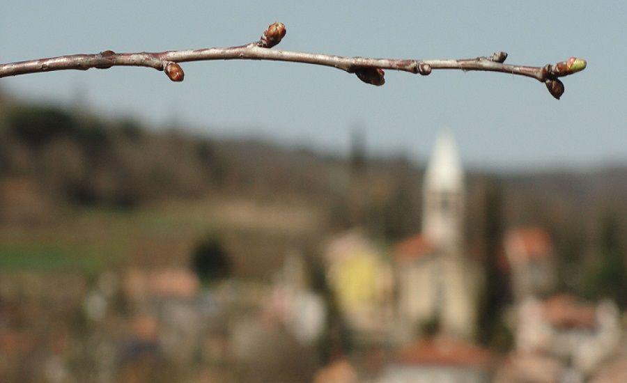 Javni poziv za potporu turističkim manifestacijama TZ središnje Istre