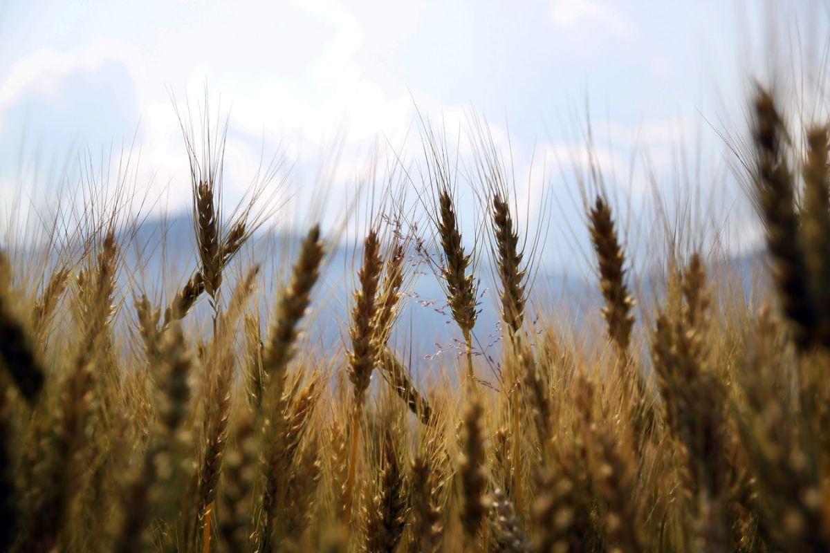 Gotovo 800.000 kuna za projekte malih poljoprivrednika Poreštine