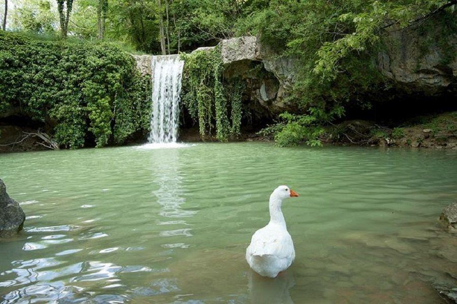 Agroturizmi u Istri - savršen odabir za ljubitelje prirodne idile