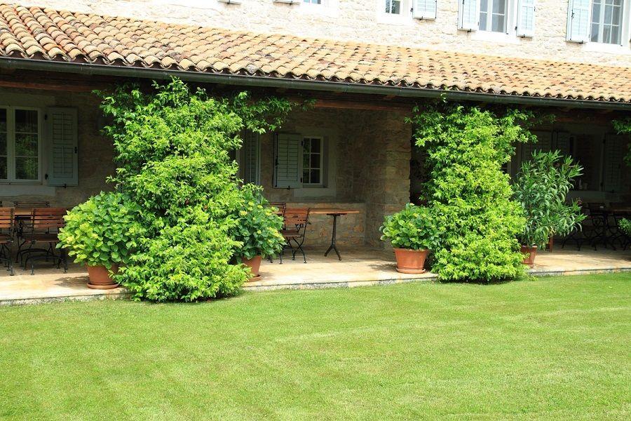 Imate kuću za odmor, ali ne stignete uređivati vrt? Zelena Točka donosi vam nekoliko prijedloga