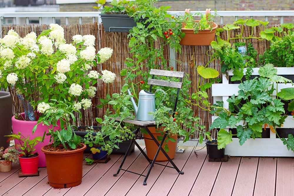 Što posaditi u vrt na balkonu