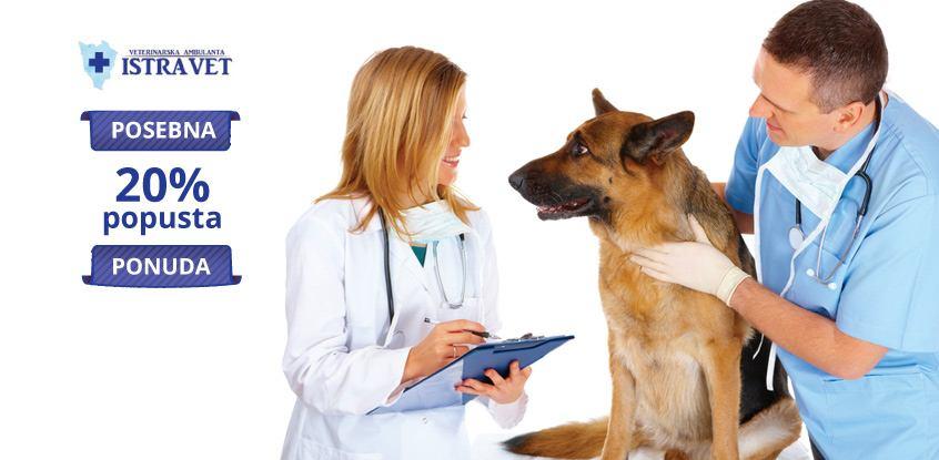 20% popusta na pregled pasa ili mačaka - Istra Vet