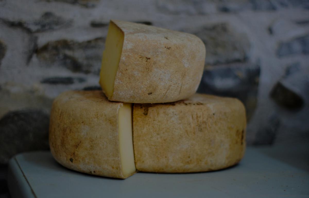Mlijeko i sir