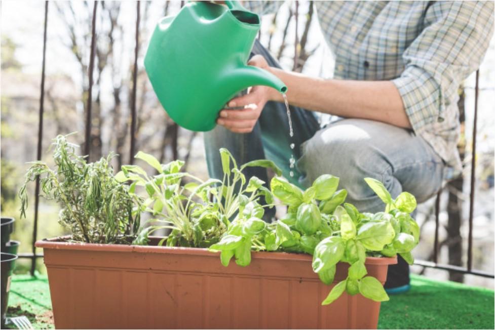 uzgoj biljaka na balkonu